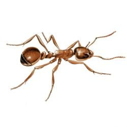 10 Amazing Ant Facts You Didn't Know