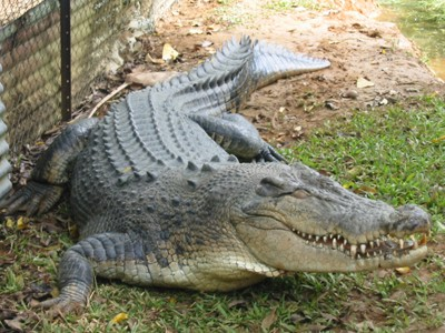 Interesting facts about crocodile