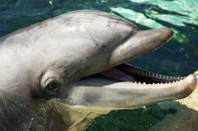 Smile of beautiful Dolphin
