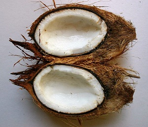 Interesting Facts About Coconuts