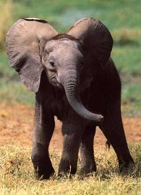Interesting Facts about Elephants