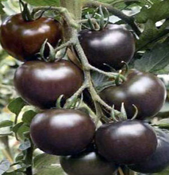 Interesting facts about Black Tomatoes