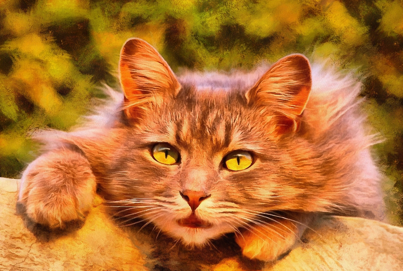 Interestnig facts about cats. Cats fun Facts