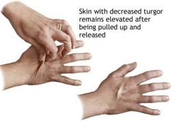 interesting facts about human skin