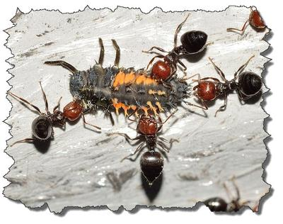 Interesting facts about Insects...