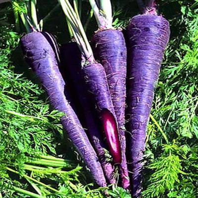 Interesting facts about Purple Carrots