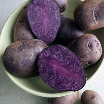 Purpure Potatoe