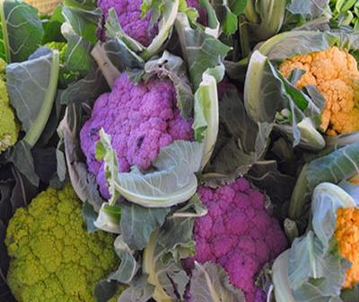 Interesting facts about Rainbow cabbage
