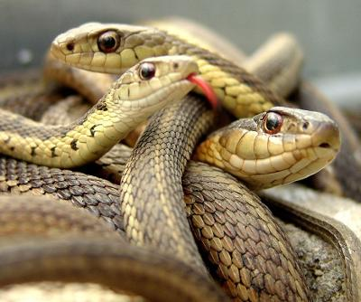 Interesting Facts about Snakes