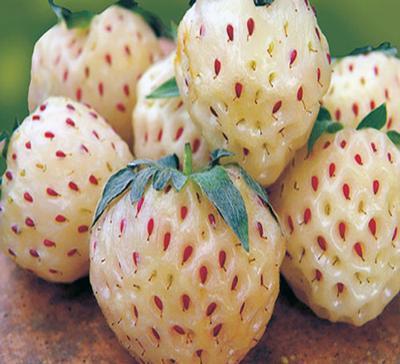 Strawberry  Pineberry