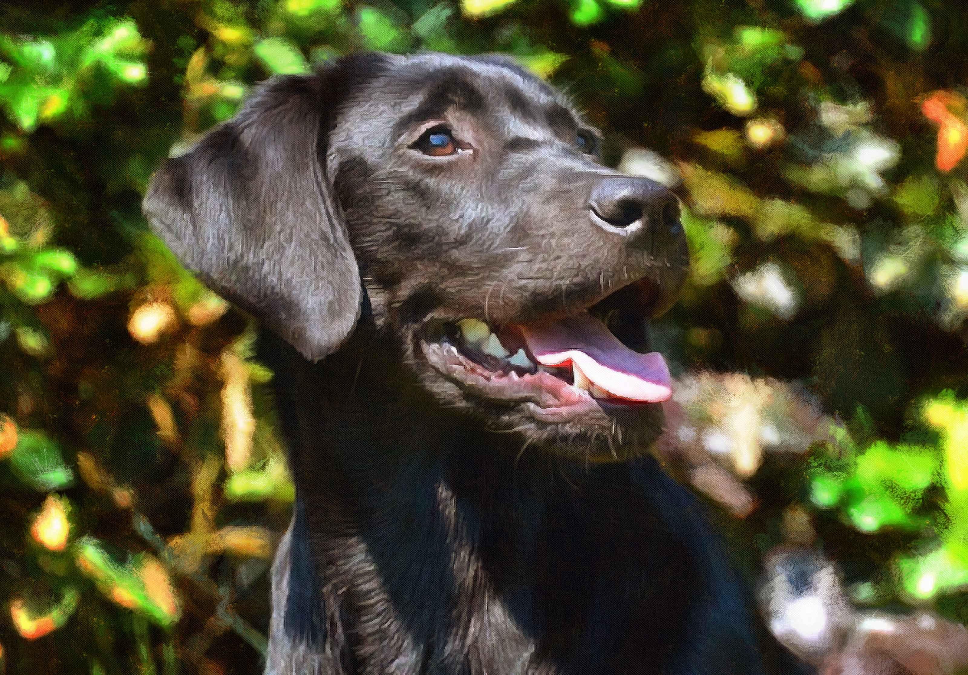 Labrador Retriever Facts