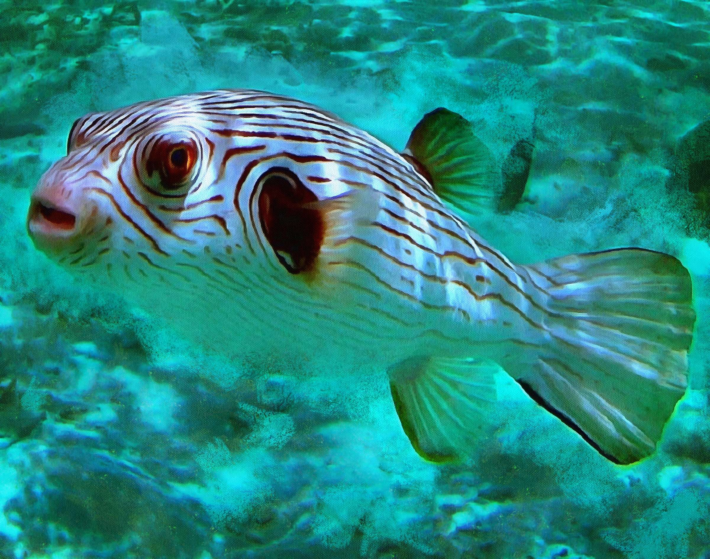 Puffer fish facts interesting facts about puffer fish for Puffer fish images