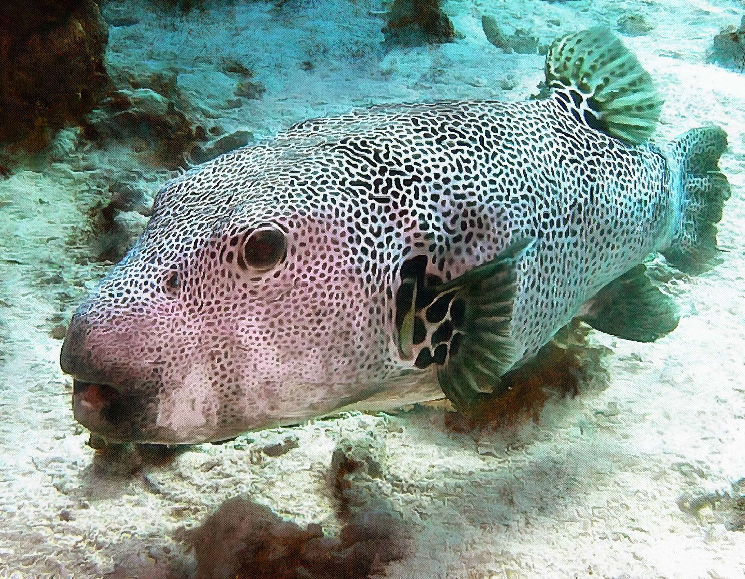 Puffer fish facts interesting facts about puffer fish for Puffer fish adaptations