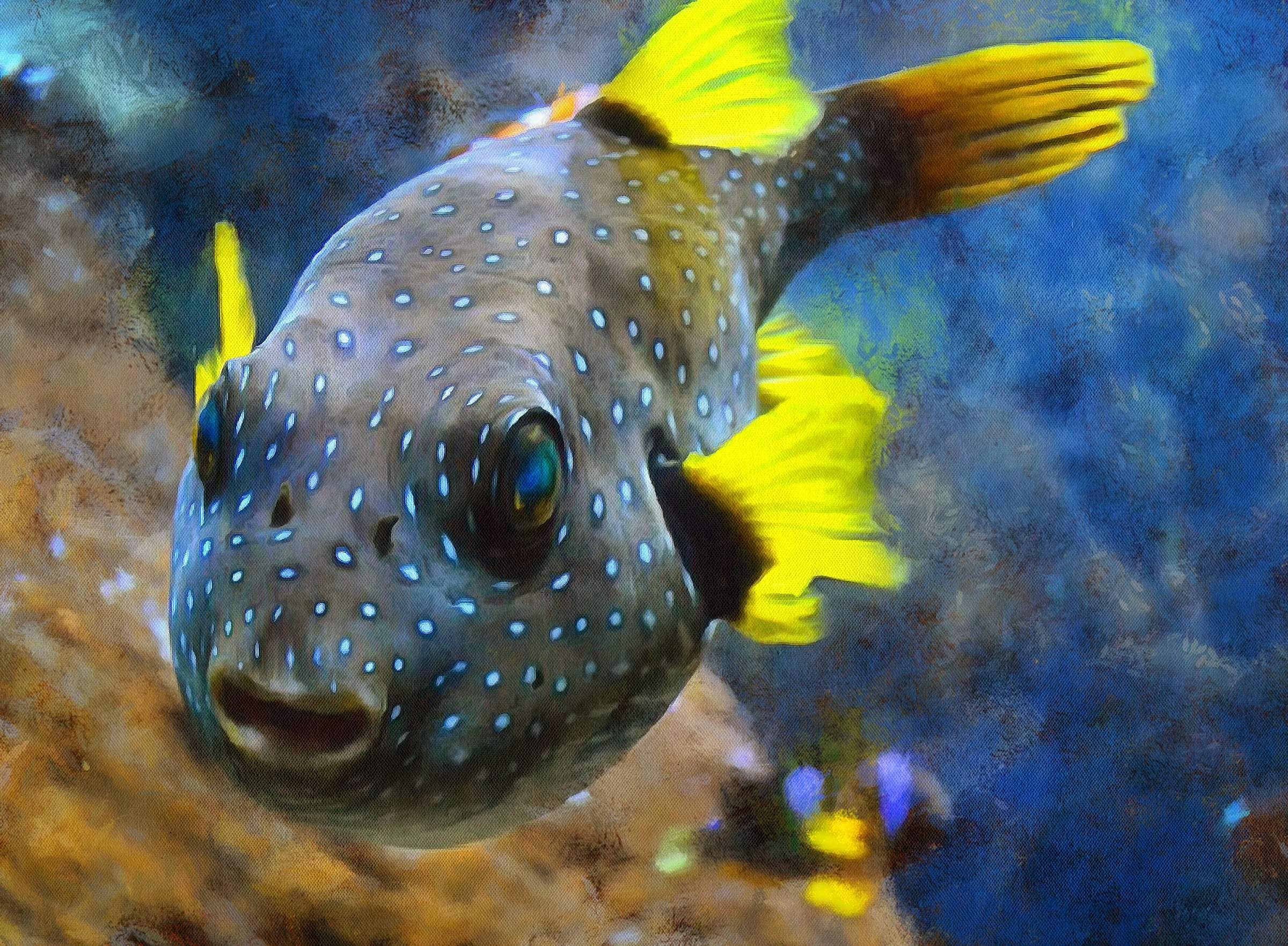 Puffer fish facts interesting facts about puffer fish for Giant puffer fish