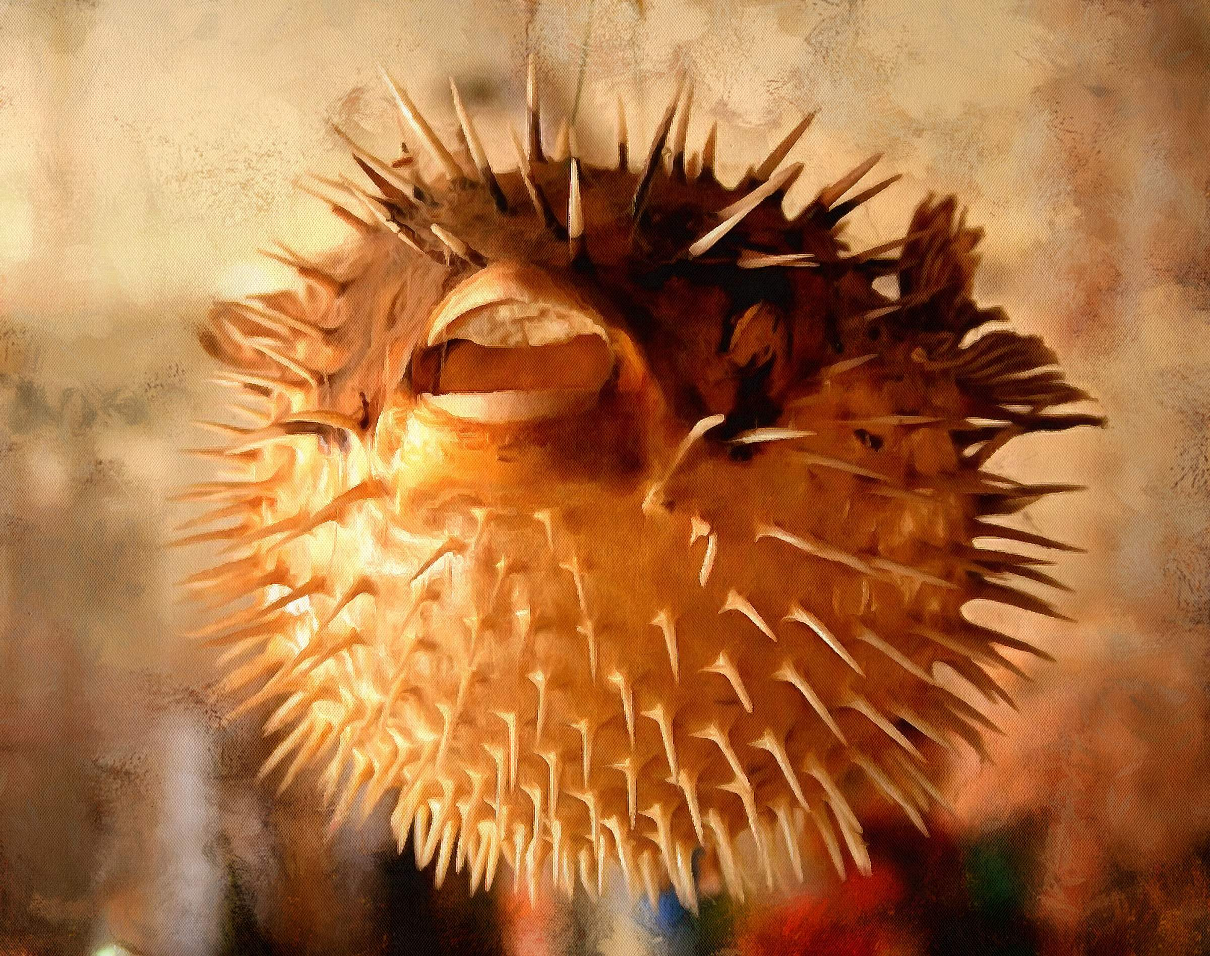 Puffer fish facts interesting facts about puffer fish for Puffer fish diet
