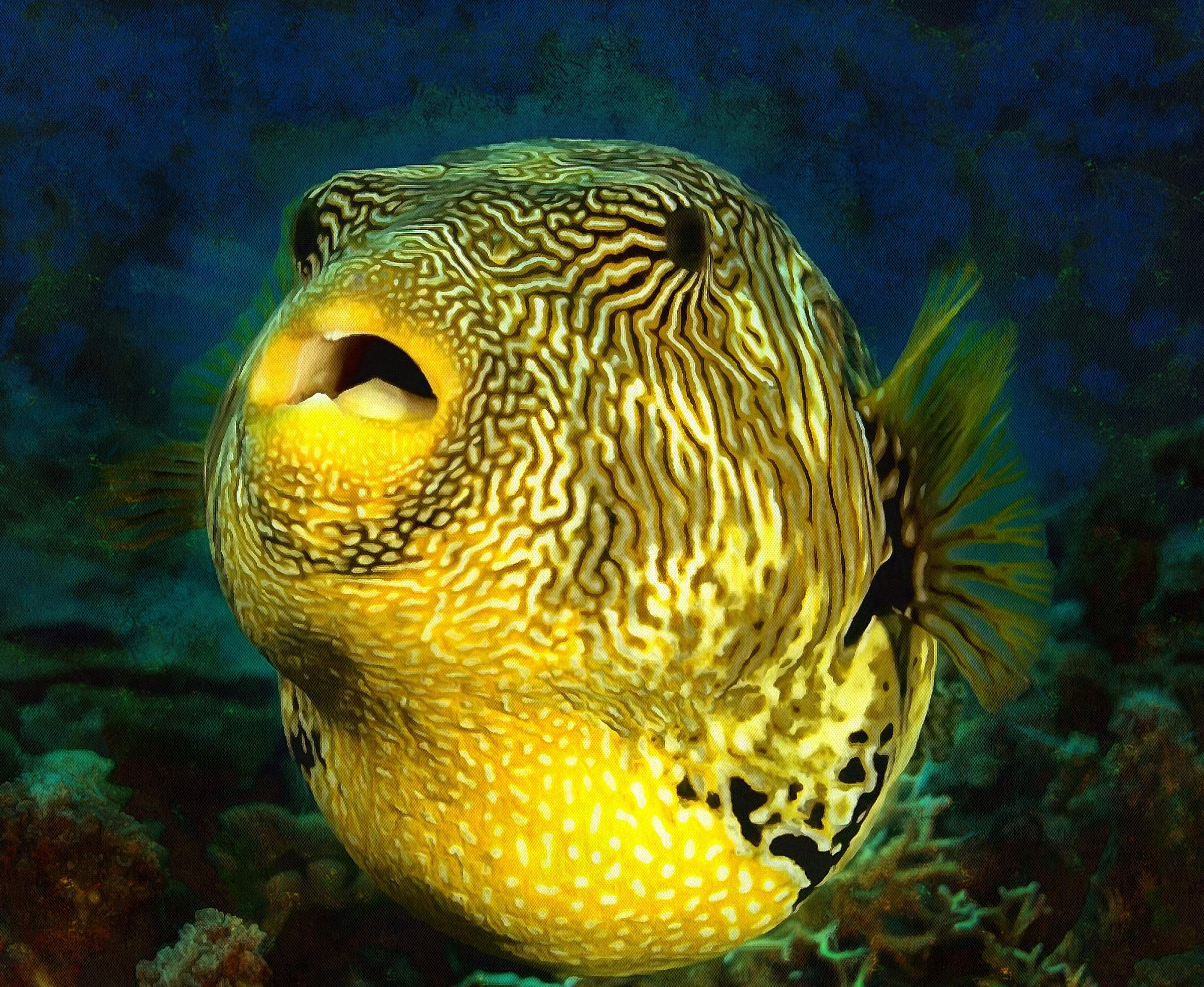 Puffer Fish Facts - Interesting facts about Puffer Fish