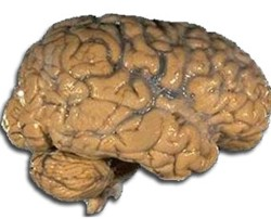 Interesting facts about human brain