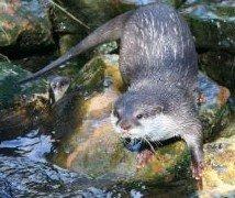 Amazing Beaver