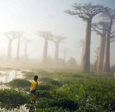 Amazing Madagascar