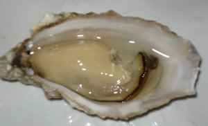 interesting facts about oysters