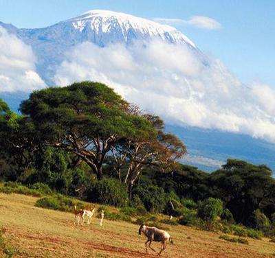 The top of Kilimanjaro covered with snow rises over a valley